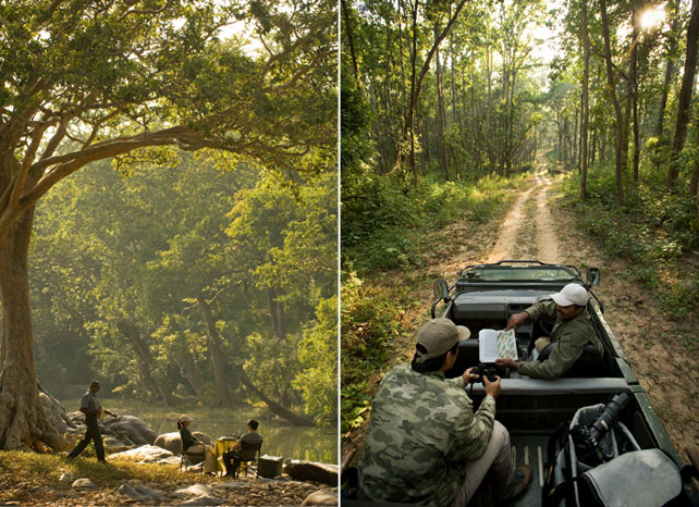Luxury Tiger Safari | Luxury India Travel | Ker Downey
