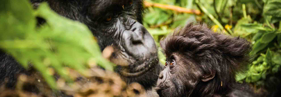 Sabyinyo-Silverback-Lodge-Luxury-Rwanda-Travel-with-Ker-&-Downey