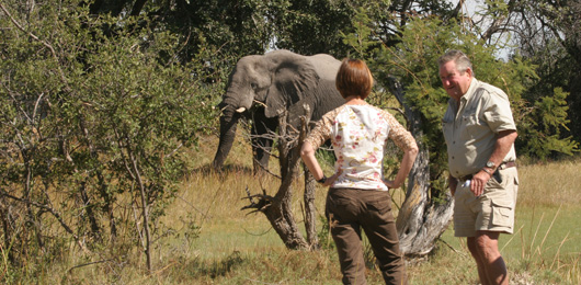 Well-Guided Safari: Catching Up with Doug Wright
