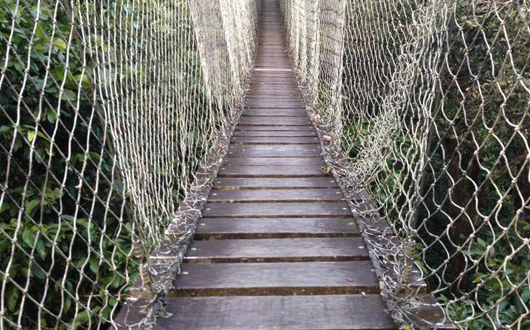 Amazon Basin - walkway