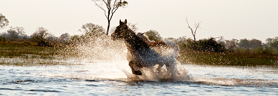 Okavango Horse Safaris | Luxury Botswana Safaris | Luxury Africa | Ker & Downey