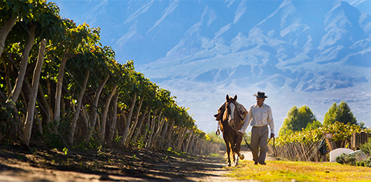 Northwest Argentina – Fine Wines and Frontiers
