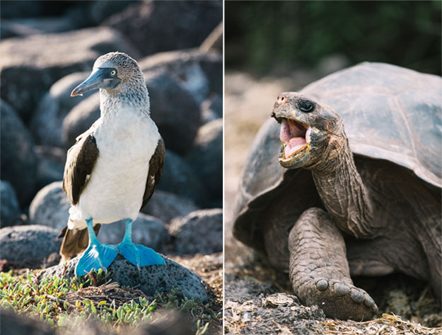 galapagos islands wildlife