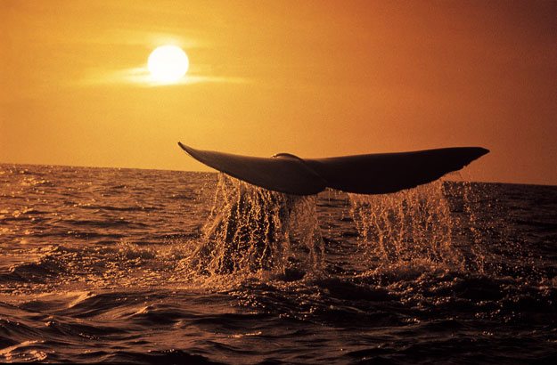 whalebest-places-to-travel-in-september-south-africa-ker-downey