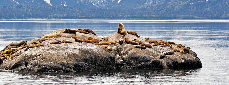 Alaska Wildlife Safari | Luxury Safari | Ker Downey