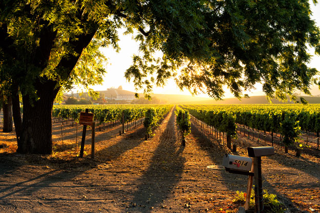 Northern California Luxury Travel | California Wine Country | Ker Downey