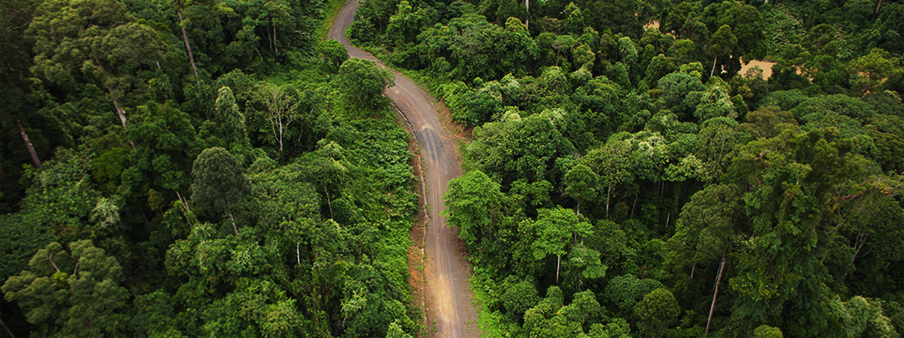 Borneo Rainforest Safari | Luxury Safari | Ker Downey