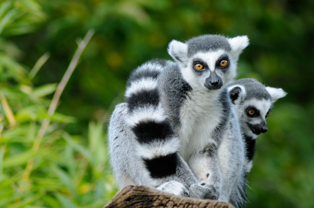 Madagascar Adventure Travel | Luxury Madagascar | Ker Downey | Lemur Island