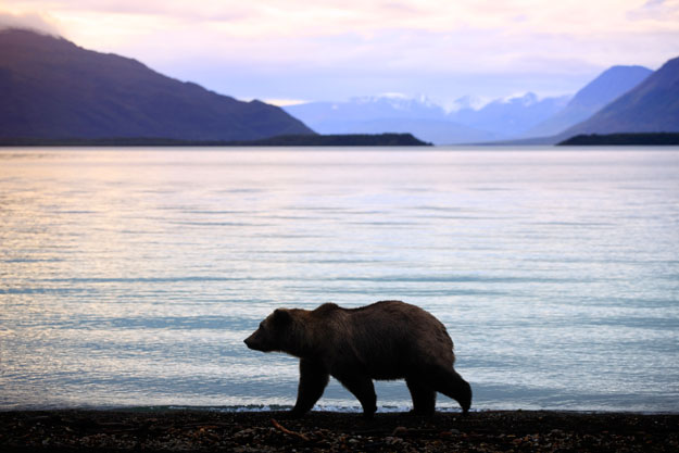 National Parks | Katmai National Park | Luxury North America Holidays | Ker Downey