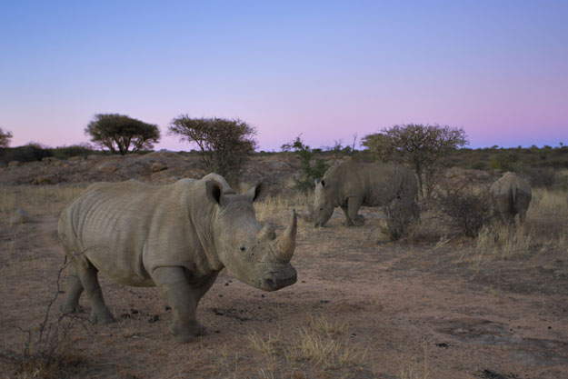 Rhino Philanthropy Project | Rhinos Without Borders | Ker Downey