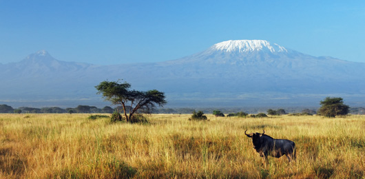 A Luxury Safari in Kenya and Tanzania