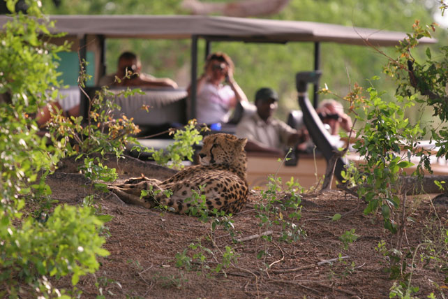 Luxury Botswana Safaris | Luxury African Safari | Ker Downey