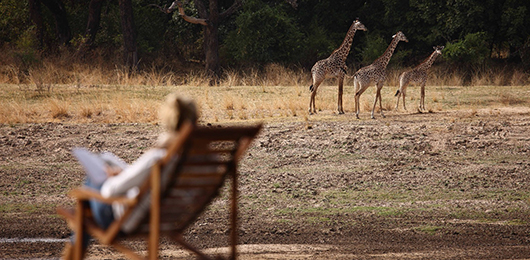 A Luxury Zambia Safari by Ker & Downey