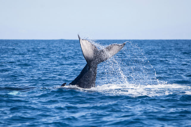 2016 Top Travel Destinations | Luxury Travel | Whale Watching in Tonga | Ker Downey