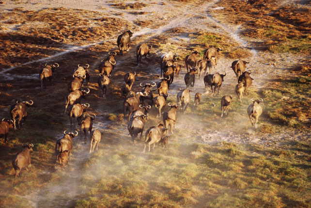 Best Places to Travel in July   Luxury Tanzania Safari   Ker Downey