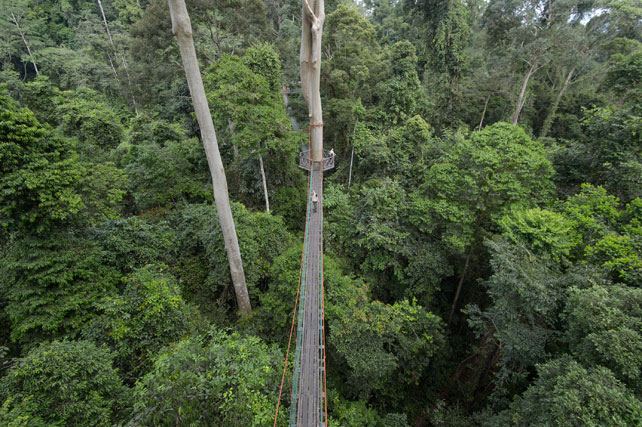 Canopy Walkways | Borneo Rainforest Lodge | Luxury Borneo| Ker Downey