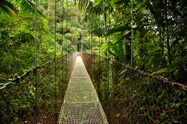 Canopy Walkways | Monteverde Lodge and Gardnes | Luxury Costa Rica | Ker Downey