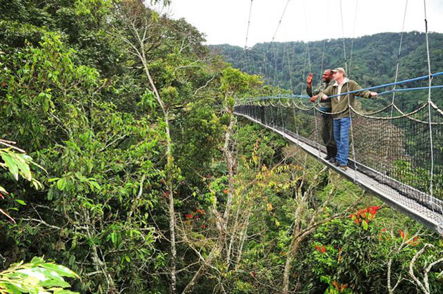 Canopy Walkways | Nyungwe Forest Lodge | Luxury Rwanda | Ker Downey