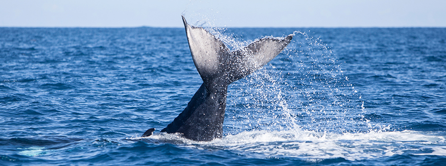 Luxury Whale Watching Around the World - Ker & Downey