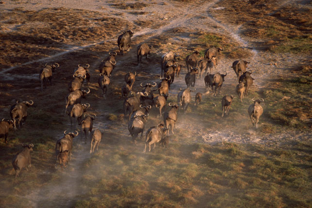 Luxury Migration Safari | Kenya and Tanzania | Ker Downey