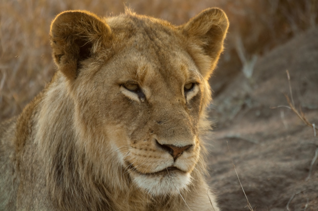 Safari and Beach Vacations | Luxury South Africa Safari | Ker Downey