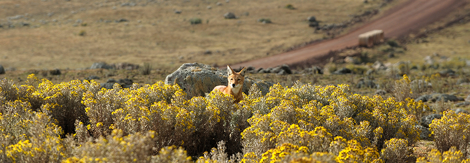 Bale Mountains National Park - Ethiopia Luxury Adventure - Ker Downey