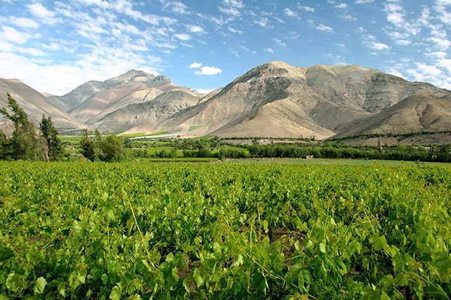 Luxury Travel to Chile - Chilean Vineyards - Ker Downey
