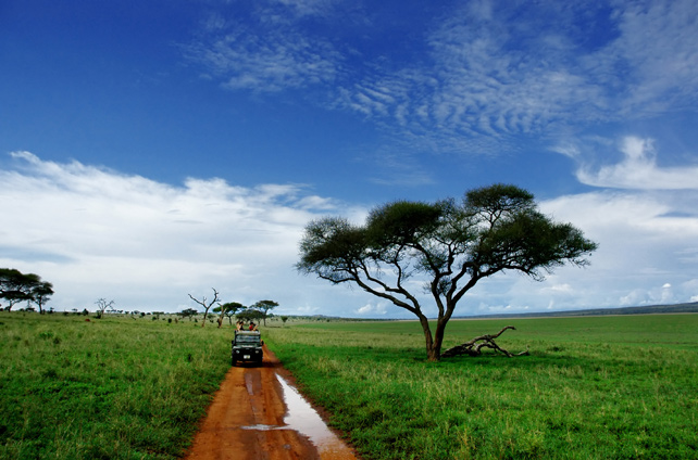 Game drive-luxury-tanzania-ker-downey-4