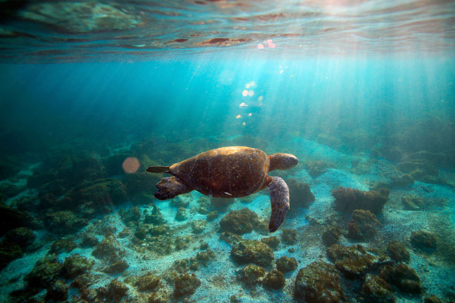 Best Places to Travel in June - Luxury Galapagos Travel - Ker Downey