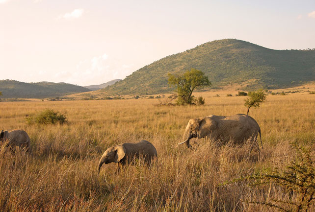 Best Places to Travel in October - Luxury South Africa Safari - Ker Downey