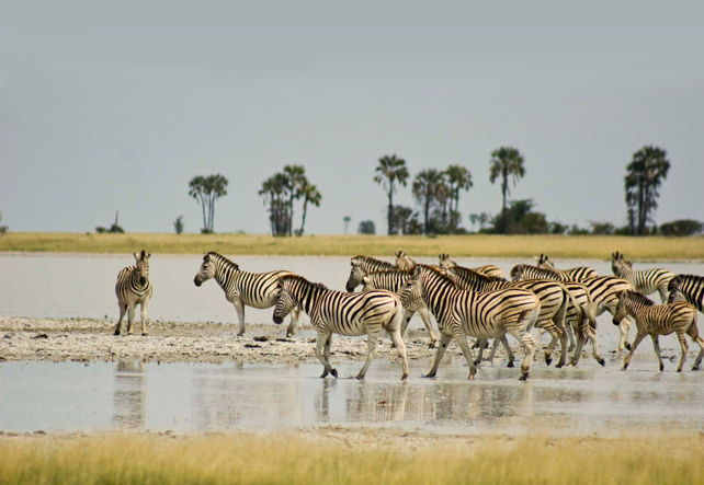 Interesting Animal Migrations - Luxury Travel - Ker Downey