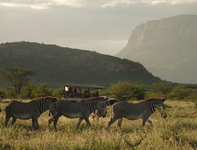 Samburu Special Five - Grevy's Zebra - Luxury Kenya Safari - Ker Downey