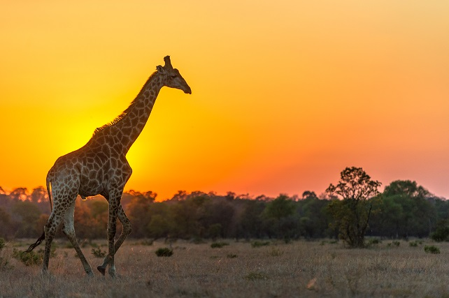 Where to Go in Africa in 2018 - Luxury Ker & Downey Tour Operator