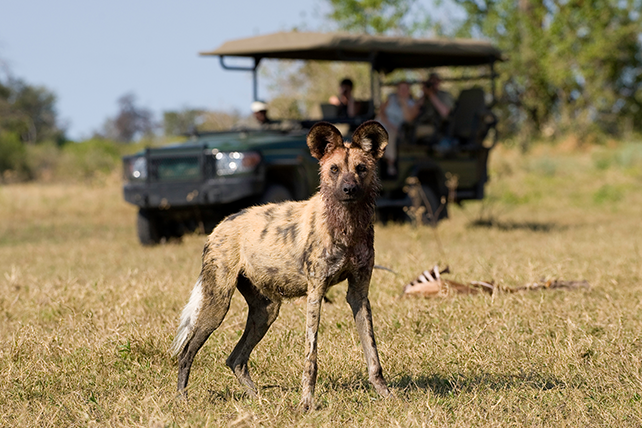 Top Places to See African Wild Dog