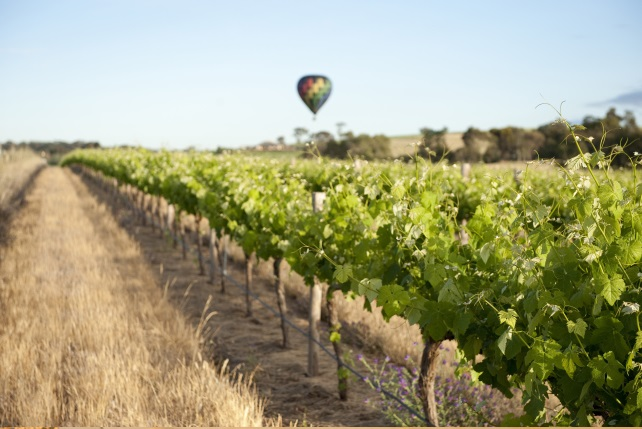Barossa-Valley-Culinary-Excursions-South-Australia-Luxury-Travel-Barossa-Valley