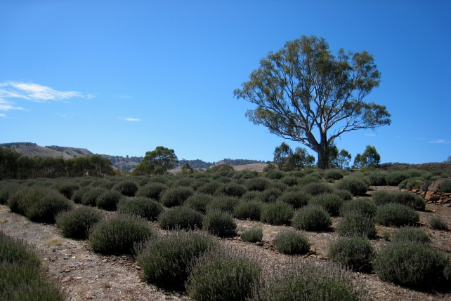 Barossa Valley Culinary Excursions - South Australia Luxury Travel