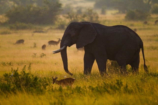 Your Best Bets On a Journey to Uganda