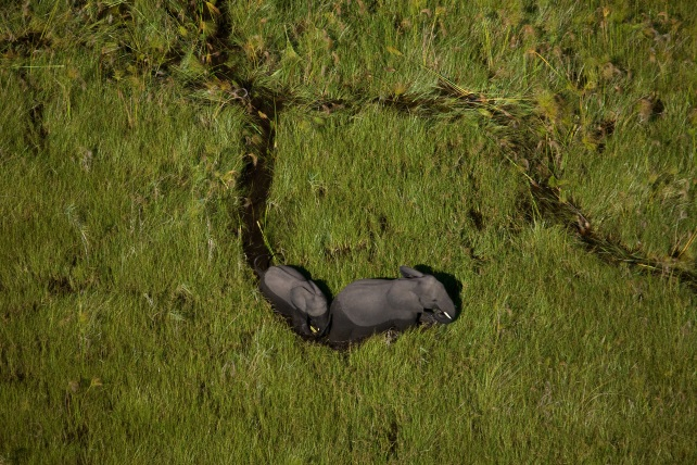 Go-Into The Okavango-ker-downey-elephants