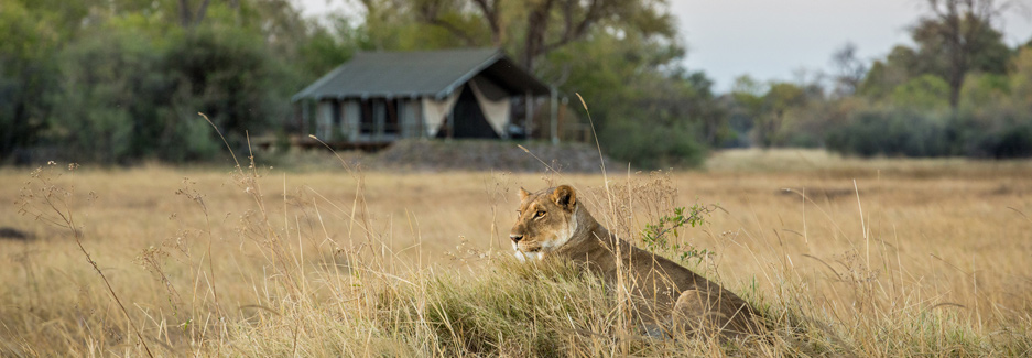 Little Machaba - Botswana Safari Camp - Ker & Downey Luxury Travel