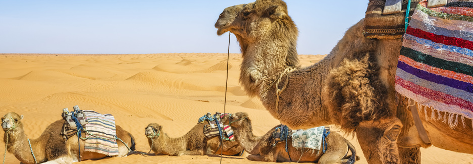 Sahara Desert - Tunisia Luxury Travel - Ker & Downey USA