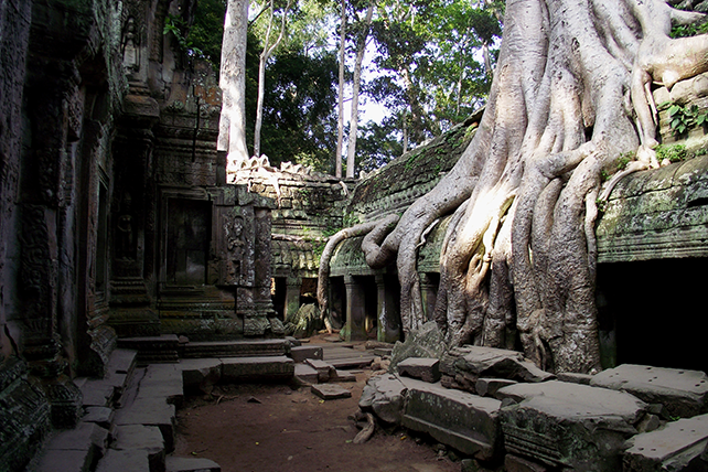 Ta Prohm, Cambodia - Multi-Country Travel to Indochina - Ker & Downey