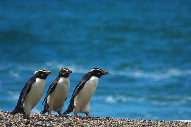 Penguins of the World - Where to See Penguins - Ker & Downey Travel