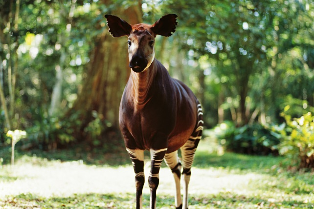 Bizarre-Animals-On-African-Safari-Ker-Downey