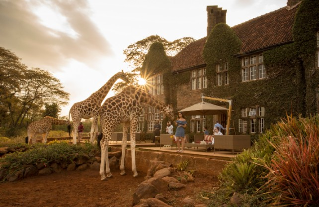 January Africa Adventures - Custom Safari Experiences - Ker & Downey-Safari-Giraffe-Manor
