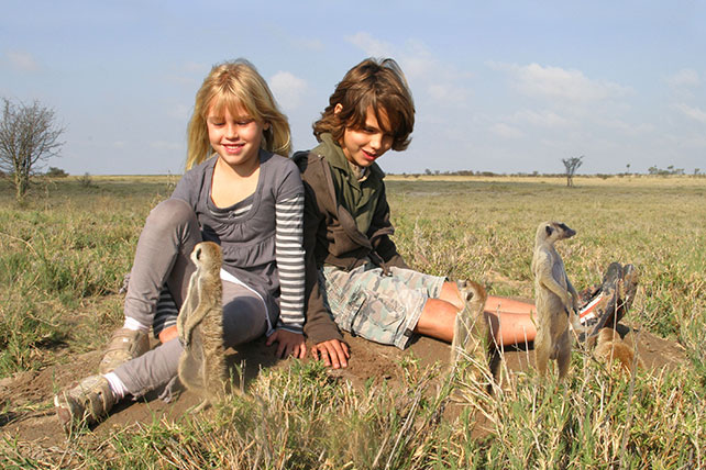 Meerkats - The Lion King - Luxury African Safaris - Ker & Downey