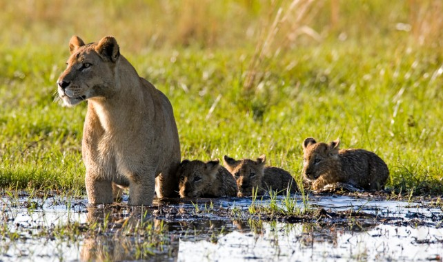 Botswana Travel in February - Africa Safari - Ker & Downey - Footsteps