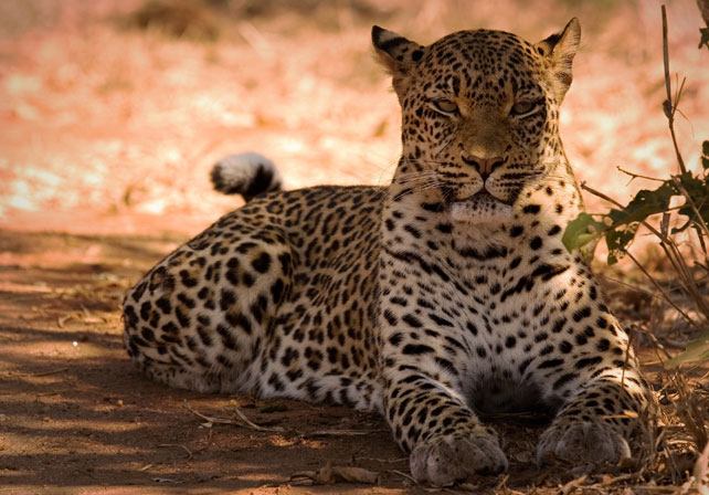 Zambia and South Africa luxury safari - Ker Downey