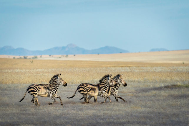 Where to go on safari to avoid the crowds - namibia - ker downey