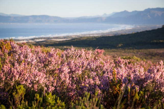 2021 is the Year of the Cape Town Safari - Ker & Downey - Grootbos