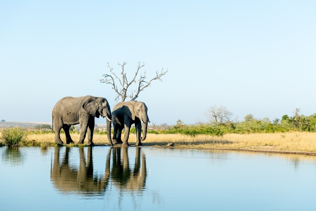 A virtual African safari - Singita - Ker & Downey - Africa